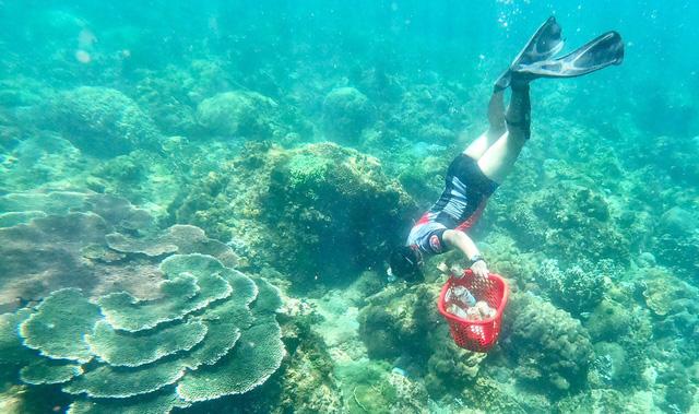 Phát động cuộc thi sáng kiến thanh niên trả xanh cho biển năm 2020 - Ảnh 1.