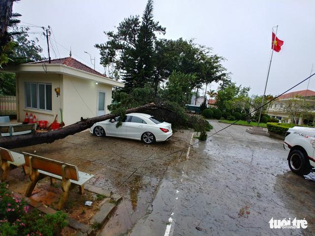 Cây xanh bị gió quật đổ khắp Đà Lạt do ảnh hưởng bão số 2 - Ảnh 1.