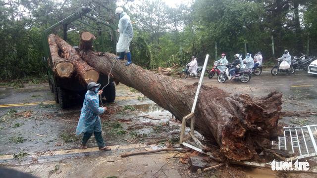 Cây xanh bị gió quật đổ khắp Đà Lạt do ảnh hưởng bão số 2 - Ảnh 3.