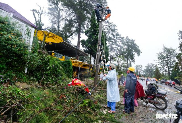 Cây xanh bị gió quật đổ khắp Đà Lạt do ảnh hưởng bão số 2 - Ảnh 2.
