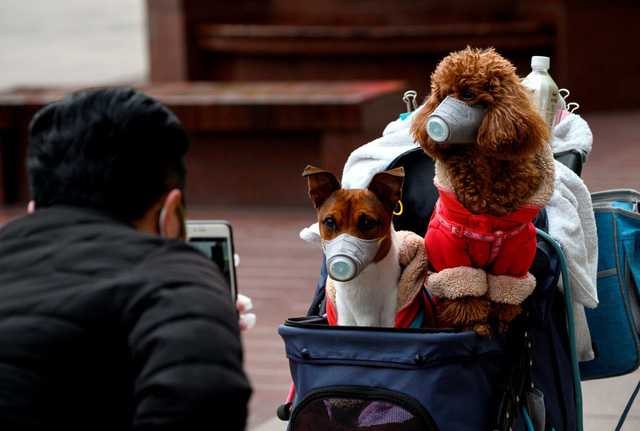 Nhật Bản: Phát hiện 2 chú chó cảnh dương tính với virus SARS-COV-2 - Ảnh 1.