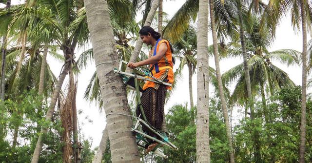 Cuộc cách mạng ngành hái dừa tại Ấn Độ - Ảnh 1.