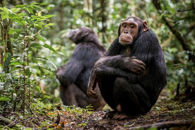 Động vật và thói quen giãn cách xã hội tránh dịch bệnh - Ảnh 1.
