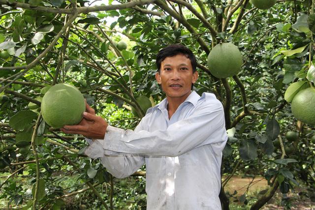 Trái cây miền Tây sẵn sàng ra chợ tết - Ảnh 1.