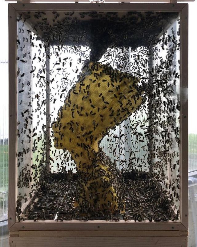 60.000 chú ong thợ tạo nên tượng nữ hoàng Ai Cập bằng sáp - Ảnh 4.