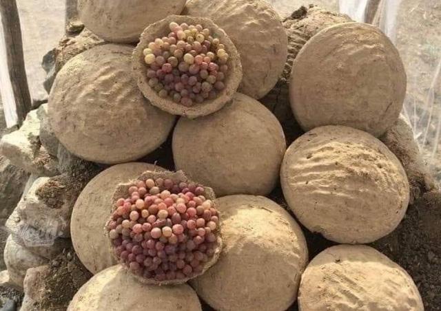 Cách bảo quản hoa quả luôn tươi ngon suốt nửa năm tại Afghanistan - Ảnh 1.