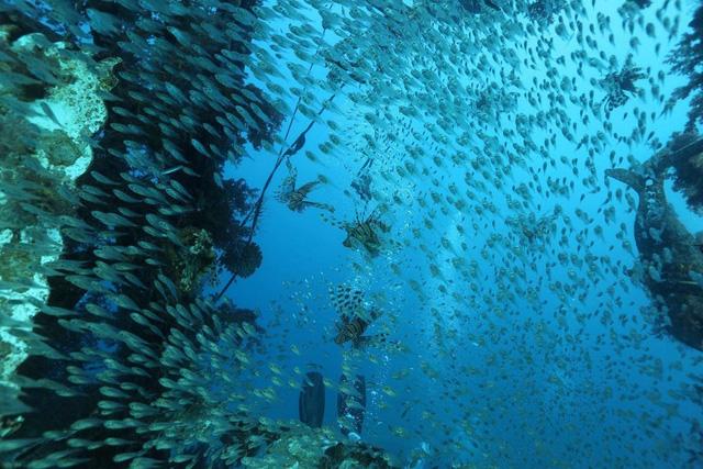 Loài nhuyễn thể bản địa ở Đông Địa Trung Hải giảm mạnh - Ảnh 1.