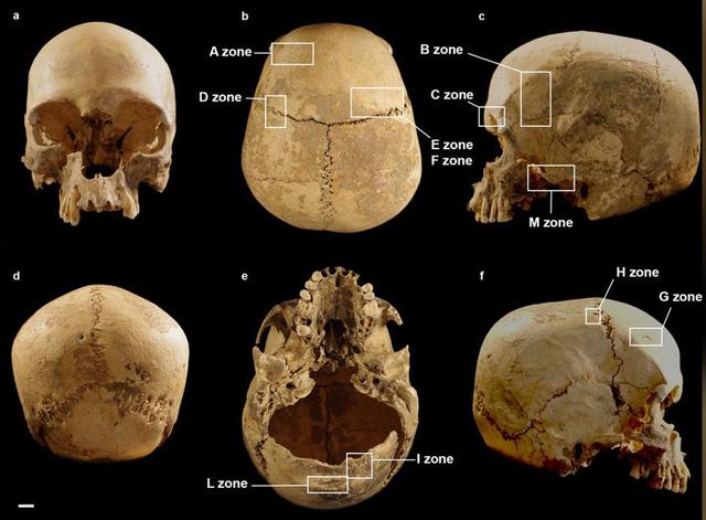 Giải mã bí ẩn về hộp sọ người trong hang sâu - Ảnh 1.