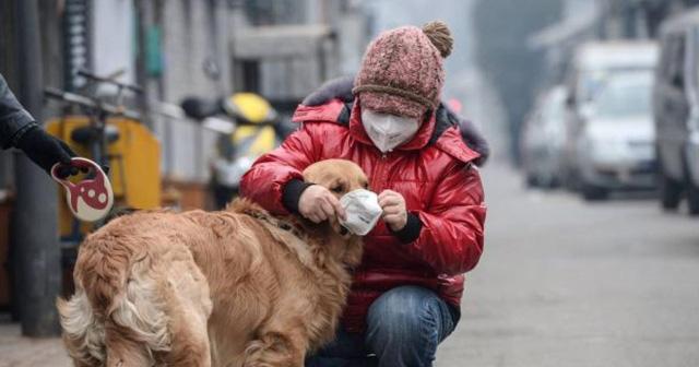 Nga đăng ký vaccine ngừa COVID-19 đầu tiên trên thế giới dành cho thú cưng - Ảnh 1.