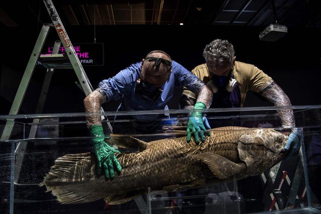 Phát hiện loài cá tưởng đã tuyệt chủng từ 65 triệu năm trước cùng khủng long - Ảnh 1.