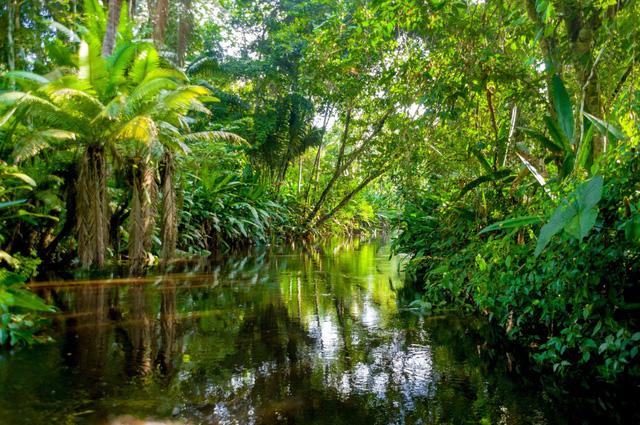 Sức mạnh đặc biệt của rừng mưa ở châu Phi - Ảnh 1.