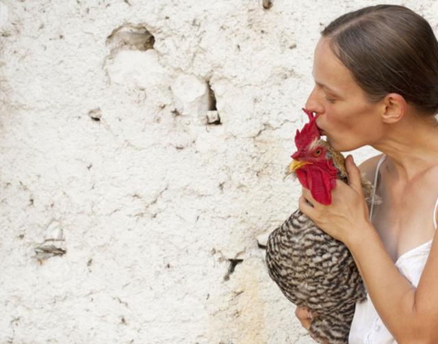CDC Mỹ khuyến cáo người dân không... hôn gà - Ảnh 1.