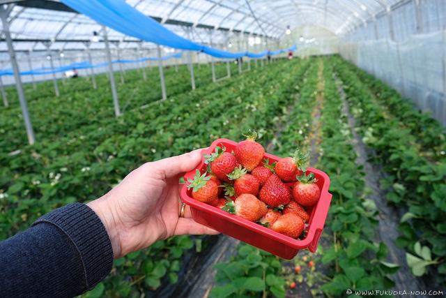 Nhật Bản cấm mang ra nước ngoài hạt giống cây trồng, cây giống - Ảnh 1.