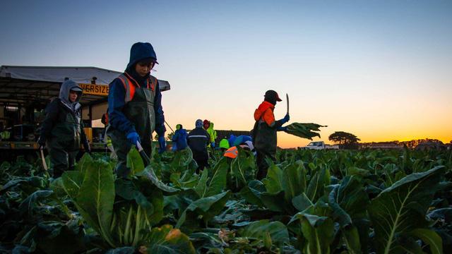 Australia tăng cường tuyển dụng lao động nông nghiệp Đông Nam Á - Ảnh 1.