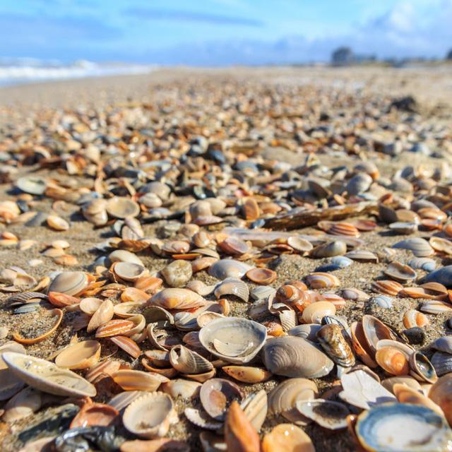 Hàng chục nghìn sinh vật biển bị luộc chín dưới nắng nóng kỷ lục tại Canada - Ảnh 1.