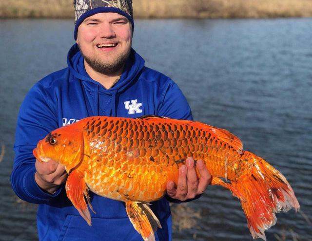 Cá vàng kích thước khủng trong hồ tại Mỹ - Ảnh 1.