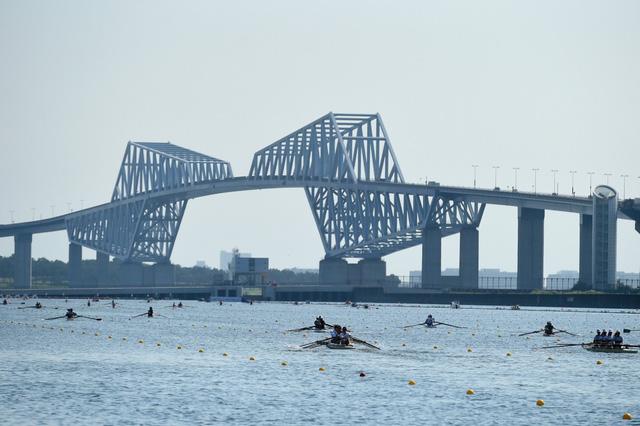 Hàu biển đe dọa điểm thi đấu quan trọng của Olympic Tokyo - Ảnh 1.
