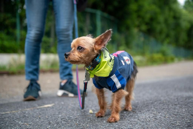 Biệt đội chó cưng ngăn chặn tội phạm ở thành phố Tokyo, Nhật Bản - Ảnh 1.