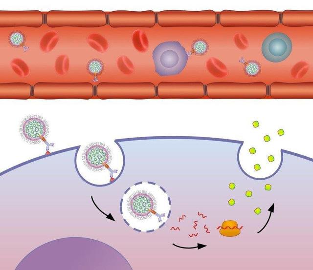 Phương pháp đưa thuốc tới từng tế bào mang bệnh - Ảnh 1.