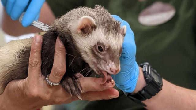 Vườn thú Mỹ tiêm vaccine ngừa COVID-19 cho vật nuôi - Ảnh 1.
