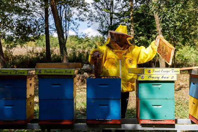 Độc đáo mô hình kinh doanh khách sạn ong lấy mật - Ảnh 1.