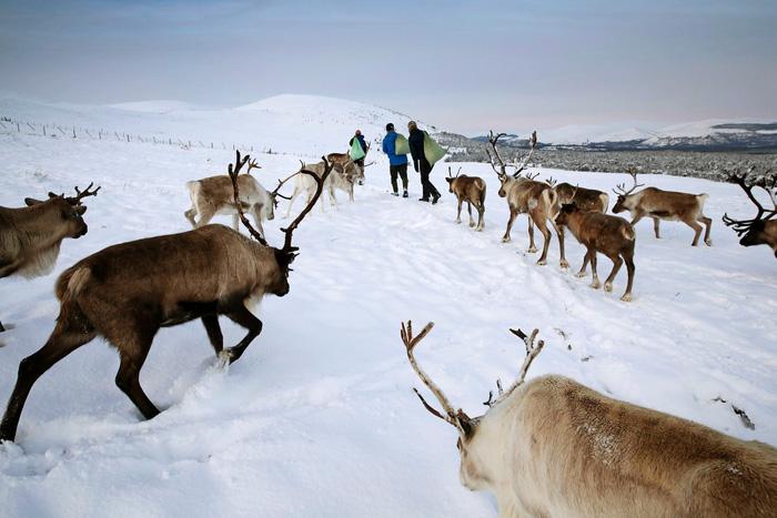 Theo chân 'bạn đồng hành cùng ông già Noel ở Scotland - Ảnh 3.