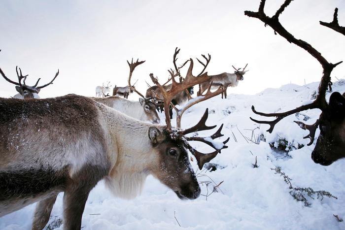 Theo chân 'bạn đồng hành cùng ông già Noel ở Scotland - Ảnh 9.