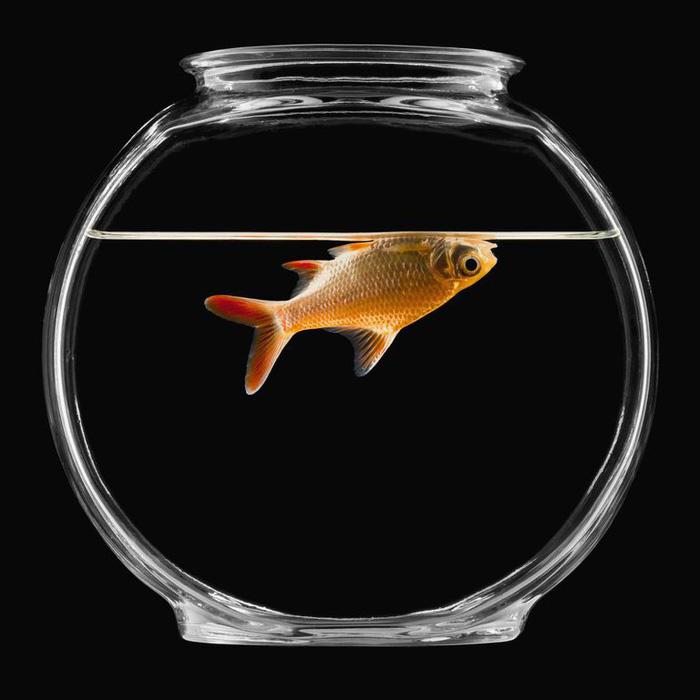 Vì sao cá chết thường nằm ngửa? - Ảnh 1.