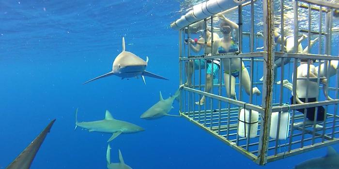 Đi Australia ngủ cùng động vật, bơi cùng cá mập - Ảnh 7.