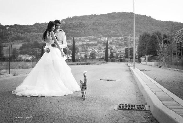 Ảnh cưới dễ thương chụp cùng mèo cưng - Ảnh 4.