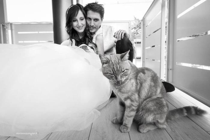 Ảnh cưới dễ thương chụp cùng mèo cưng - Ảnh 6.