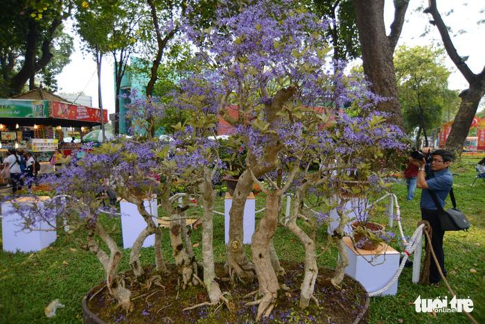 Hội hoa xuân Tao Đàn đã mở cửa đợi khách thưởng hoa - Ảnh 5.