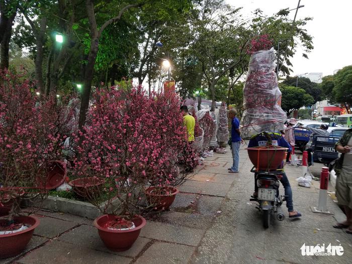 27 Tết: Đào Bắc giảm giá, dân Sài Gòn đổ xô lựa mua - Ảnh 3.