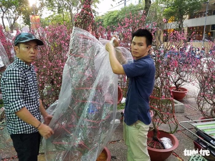 27 Tết: Đào Bắc giảm giá, dân Sài Gòn đổ xô lựa mua - Ảnh 2.