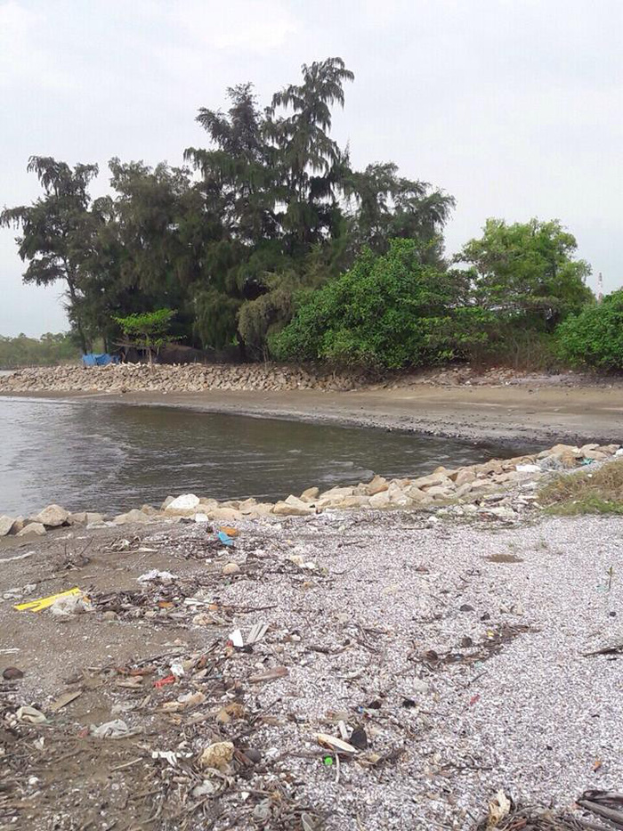 Khu đô thị du lịch biển Cần Giờ: Phải lưu ý hệ sinh thái - Ảnh 2.