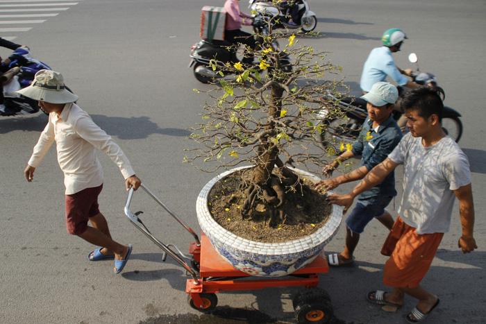 Sài Gòn nhộn nhịp những chợ mai Tết - Ảnh 7.