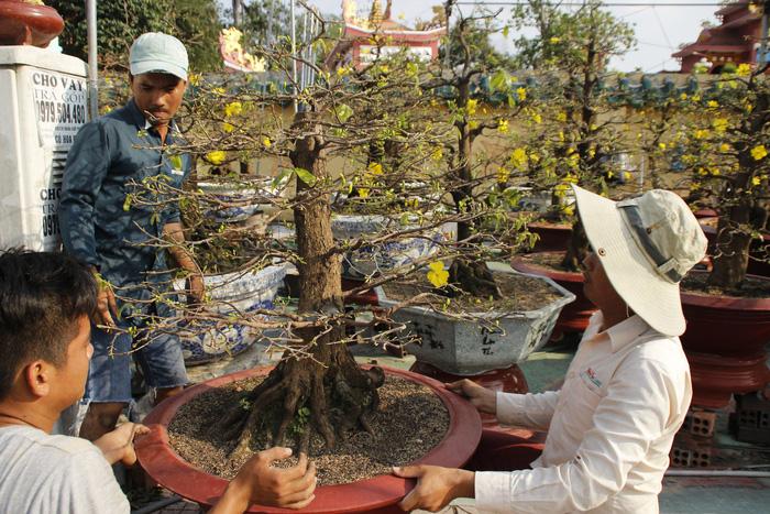 Sài Gòn nhộn nhịp những chợ mai Tết - Ảnh 6.