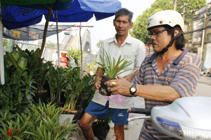 Sài Gòn nhộn nhịp những chợ mai Tết - Ảnh 15.
