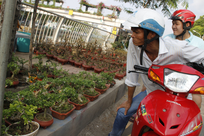 Sài Gòn nhộn nhịp những chợ mai Tết - Ảnh 14.