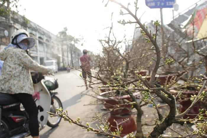 Sài Gòn nhộn nhịp những chợ mai Tết - Ảnh 12.