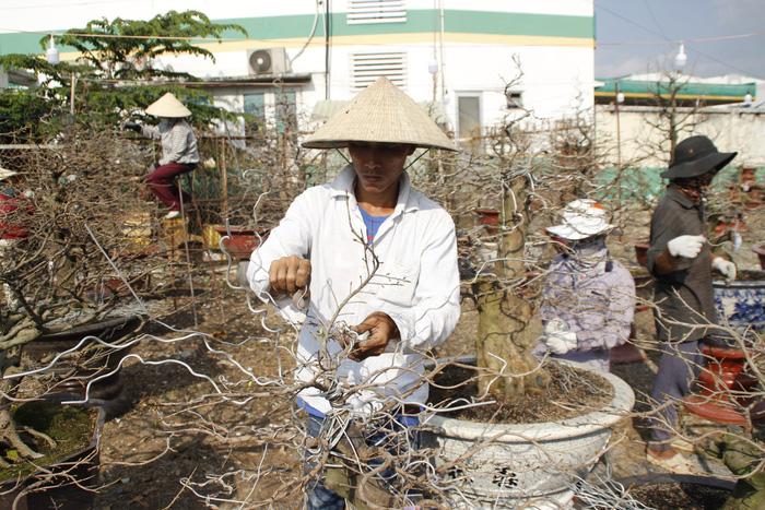 Sài Gòn nhộn nhịp những chợ mai Tết - Ảnh 4.