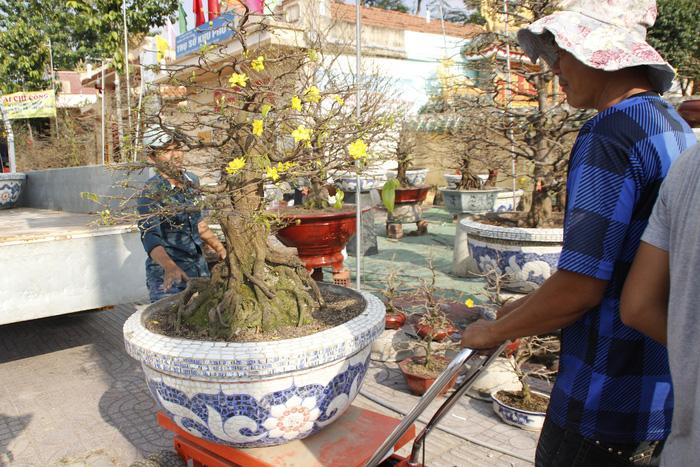 Sài Gòn nhộn nhịp những chợ mai Tết - Ảnh 3.