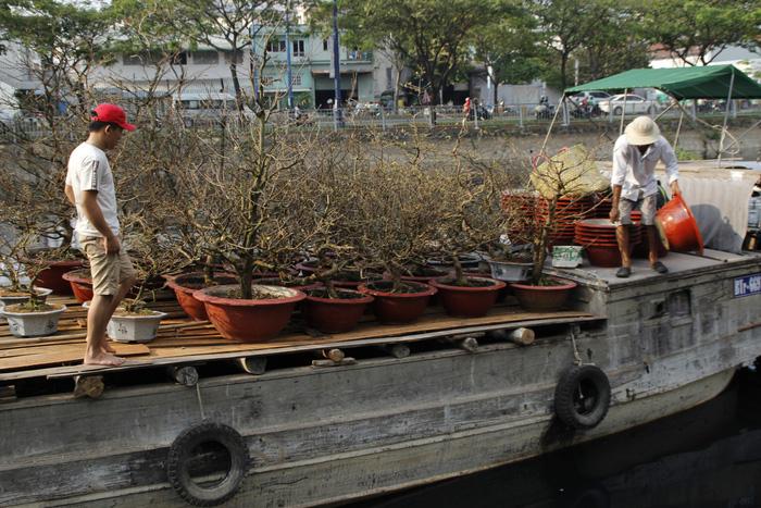 Sài Gòn nhộn nhịp những chợ mai Tết - Ảnh 11.