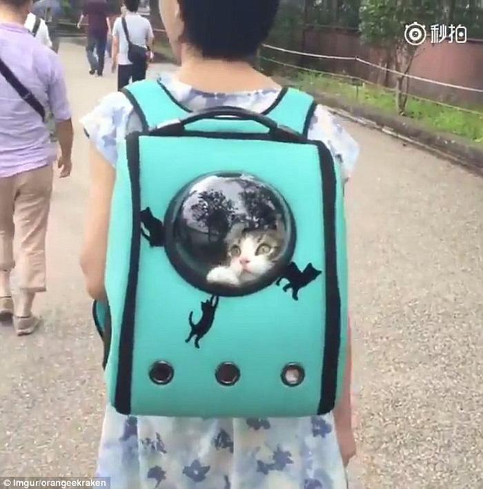 1.001 cách mang thú cưng đi chơi cùng chủ - Ảnh 1.