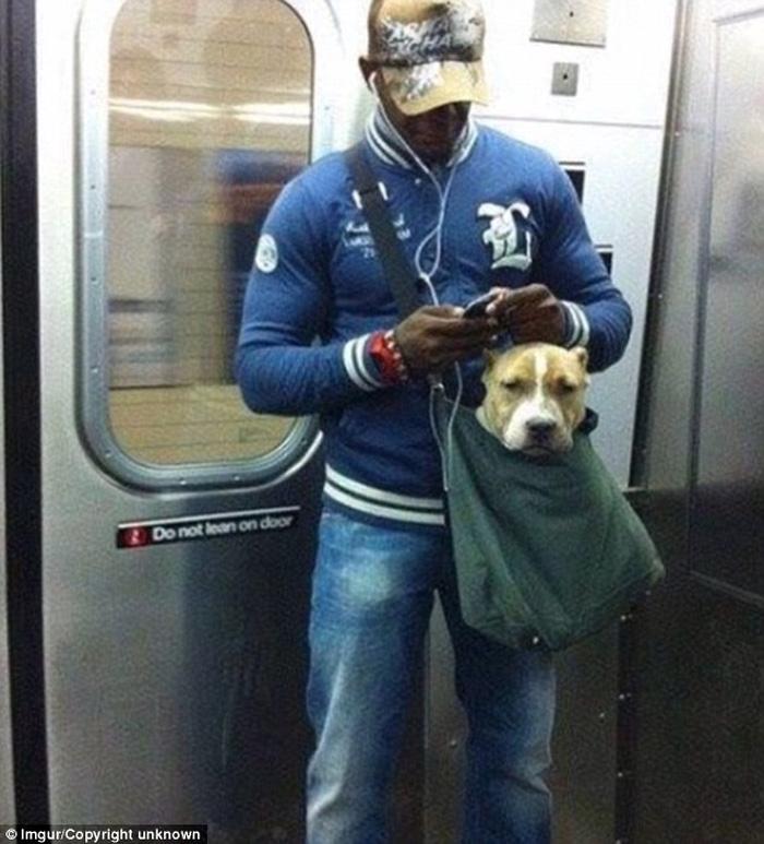1.001 cách mang thú cưng đi chơi cùng chủ - Ảnh 3.