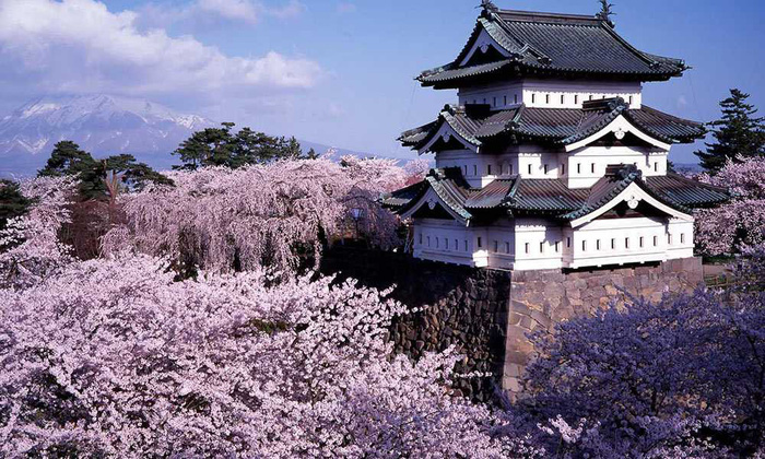 Đi Nhật Bản ngắm hoa anh đào ở đâu đẹp nhất? (phần 2) - Ảnh 7.