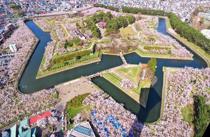 Đi Nhật Bản ngắm hoa anh đào ở đâu đẹp nhất? (phần 2) - Ảnh 8.