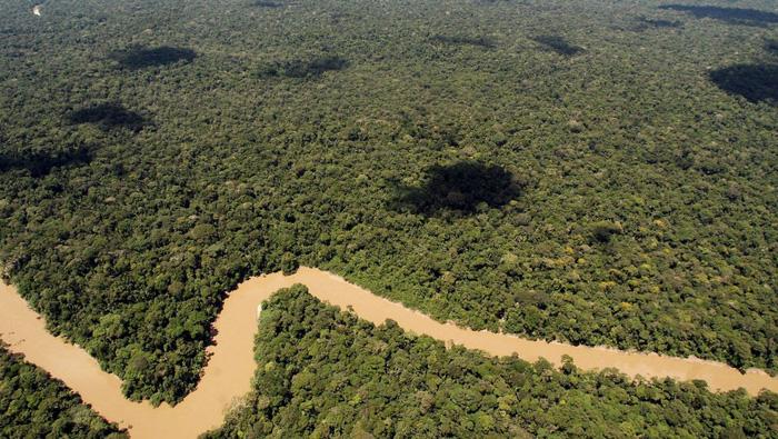Rừng Amazon sắp mất nửa số loài vì biến đổi khí hậu? - Ảnh 1.