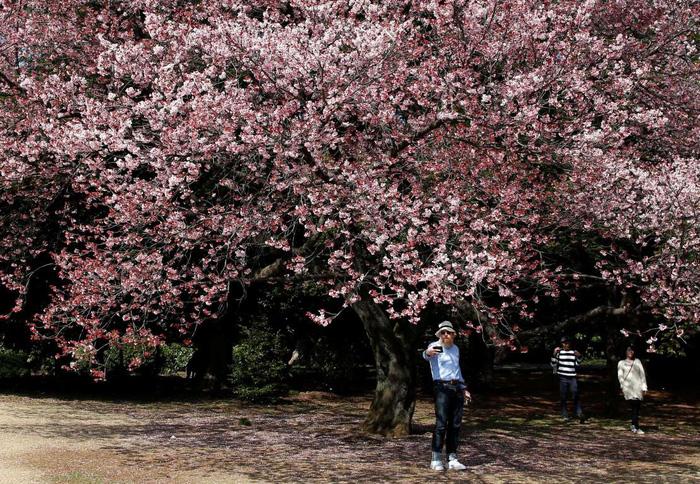Rực rỡ mùa hoa anh đào Nhật Bản - Ảnh 6.