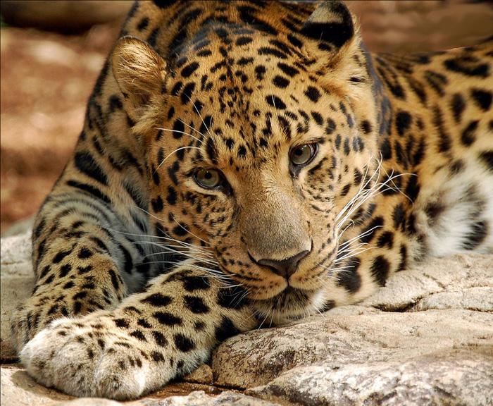 Những động vật bên bờ tuyệt chủng - Ảnh 1.